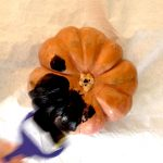 halloween pumpkin step 2